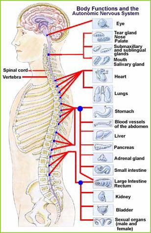 chiropractic-main2
